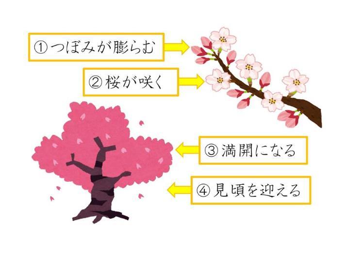일본어공부_사쿠라에 관한 일본 표현  (1).JPG