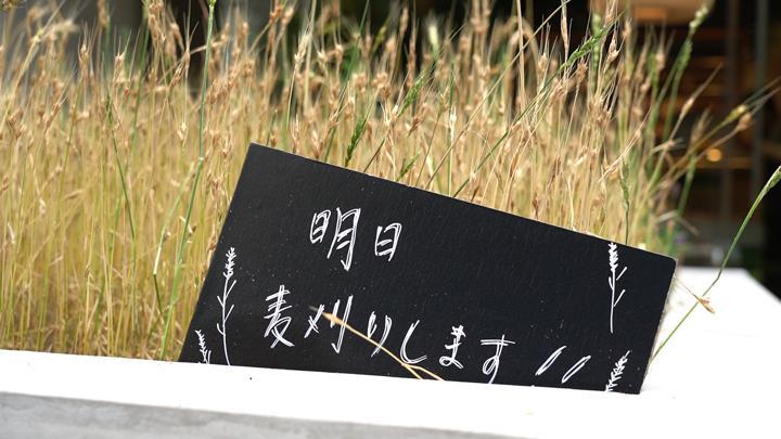 일본제과제빵학교 비져너리아츠 전문학교_밀가루 재배  (2).JPG